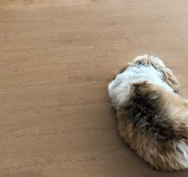 Best Flooring Options for Pet Owners